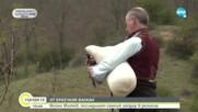 Войно Митев - последният самоук гайдар в Еркечкия балкан