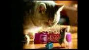 Мишка Или Храна