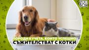 Породи кучета, които успешно съжителстват с котки