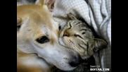 Смях - куче и котка се прегръщат
