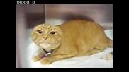 Котка в котешка депресия - Смях