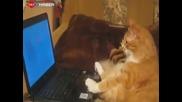 Коте гледа филм на лаптопа и се кефи