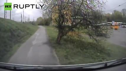 Полицията в Рига преследва диво прасе