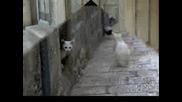 Да Спасим Котките В България