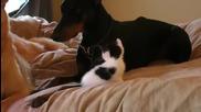 Никой не се е*ава с котето, защото си има сериозна охрана!