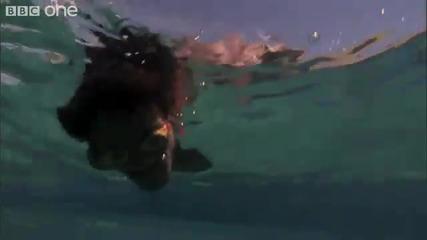 Как ловят риба т. нар. морски цигани