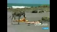 магаре на плажа