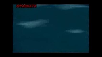 Великият Хищник Акулата