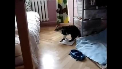 От котката кенгуру нестава