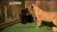 Стресната мечка