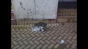 Две котета праят мрасотии..