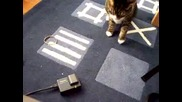 Котката С Най Бързите Лапи На Света !!