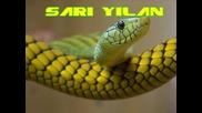 Abbas - Sari Yilan Orginal ``