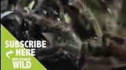 Комуникацията при паяците..