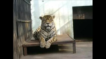 снимки на най - богатия зоо парк