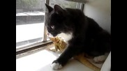 Коте обича да си гушка игуаната