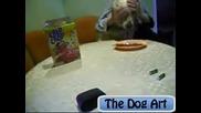 The Dog Art - Как закусва всяко куче ? ( Голдън ретривър )