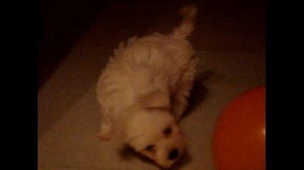 Мъничко и сладичко кученце