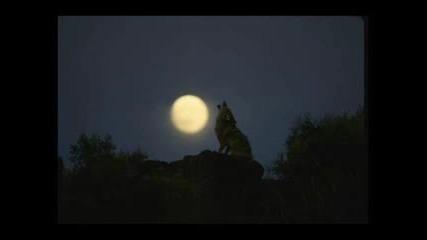 Любе - Луна