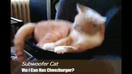 Subwoofer Cat