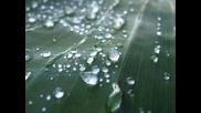 Дъжд_0001