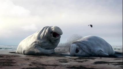 Морски слонове - Анимация!