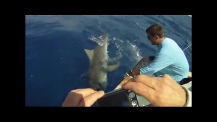 Tiger Shark Fishing the Florida Keys
