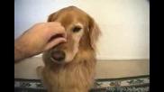 Куче Балък Смях