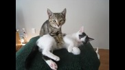Котешки масаж !