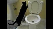[смях] Котки и Тоалетни