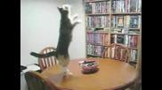 Котката Танцува - Смях