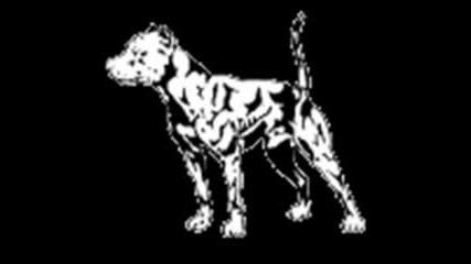 Питбул Куче - Убиец