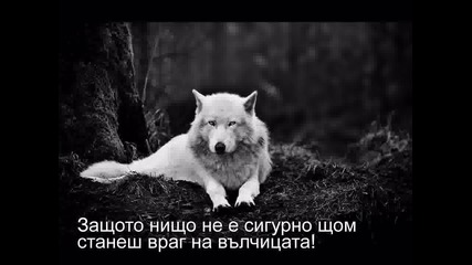 A wolf trailar