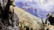 Velveteen - L.s.p. Wars