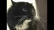 Пееща котка невероятно!!! По-добра от свирещата!!!гледайте!!!