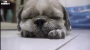 Сладко кученце заспива!