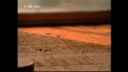 От Местопрестъплението - 8x01 - Извън времето - 1ч (бг аудио)