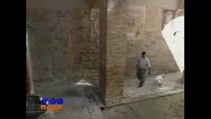 кучето от а до я дого аржентино(фильм от Vegas в 2002)