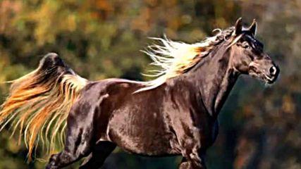 Живка папанчева Димо си варка коньето