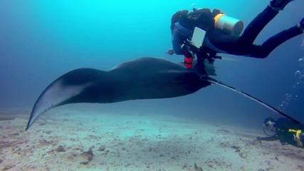 Да плуваш до огромна манта - Gopro