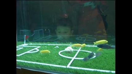 В обектива: Риби играят футбол в Шанхай
