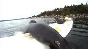 Малки тюленчета се опитват да сърфират