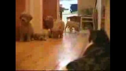 Кученца Сладури И Коте