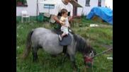 Бебе Язди Пони