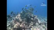 Подводната Красота на Малдивите
