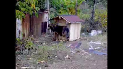 Дете В Бърлогата На Кучето