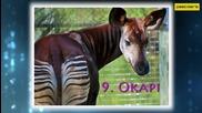 Топ 10 Най - рядко срещаните животни в света