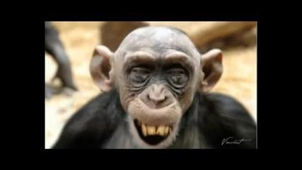 Ненормална маймуна