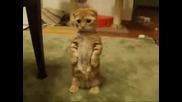 Сладко Коте (прилича На Котето На Шрек)
