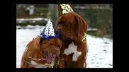 Кучета И Котки Пеят Merry Chrismas